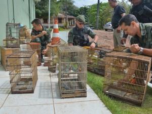Cerca de 80 aves foram recuperadas neste sábado. Foto: Walter Paparazzo/G1