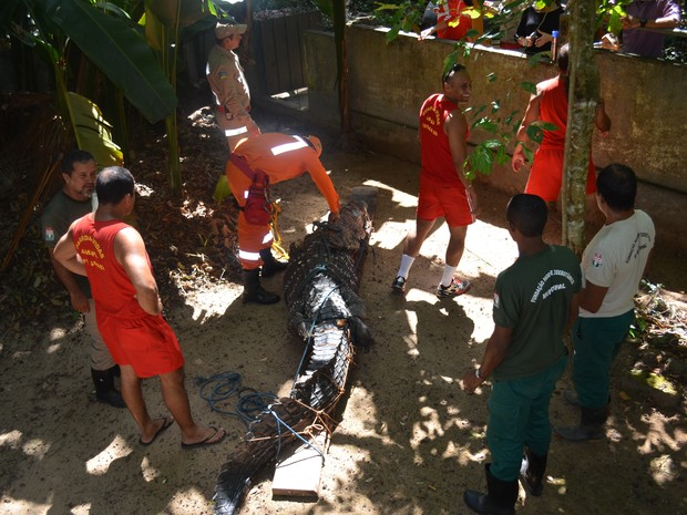 Jacaré passará por exames que irão determinar o tipo de tratamento. Foto: Dyepeson Martins/G1