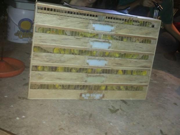 Segundo coordenador do Cepas, 50 animais eram transportados em caixas onde só cabiam 10. Foto: Gizelle Pagliares de Almeida