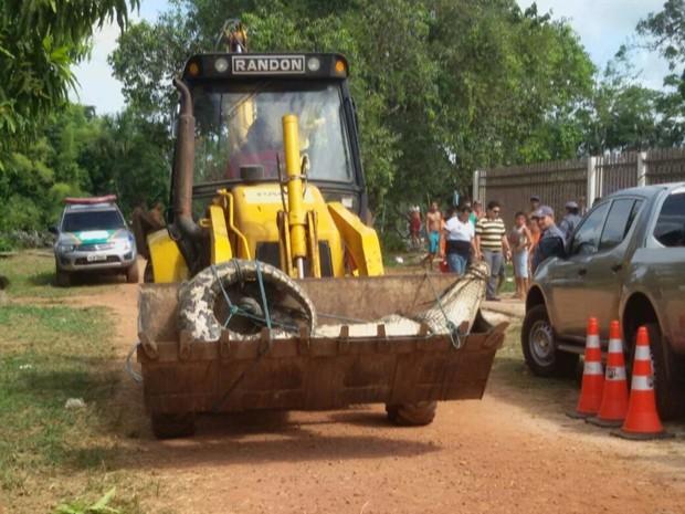 Animal sendo transportado para o quartel da PM de Calçoene. Foto: Reprodução/TV Amapá