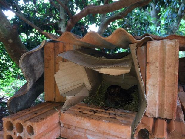 Ninho foi feito com caixa de papelão e tijolos. Foto: Valdineir Rodrigues/ RPCTV
