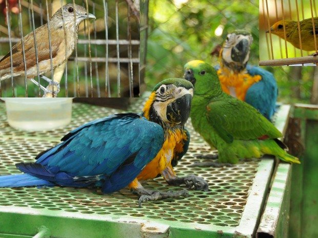 Entre as espécies encontradas estão papagaio e araras-canindé. Foto: Antônio Gonçalves/Ascom Palmas