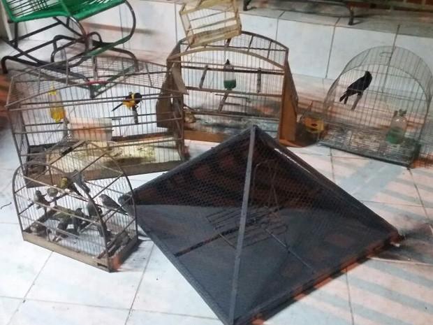 Pássaros apreendidos em Samambaia. Foto: Polícia Militar/Divulgação