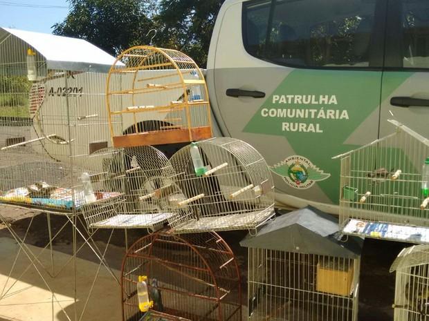 Pássaros foram soltos em reserva ambiental. Foto: Divulgação / Polícia Ambiental