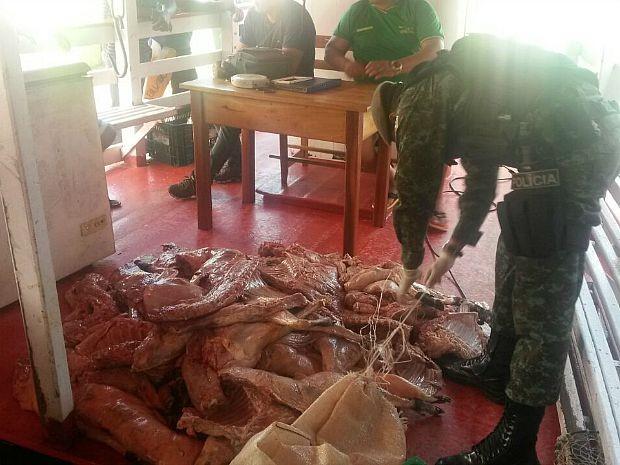 Material foi apreendido pelo Batalhão Ambiental neste domingo (2). Foto: Divulgação/Batalhão Ambiental