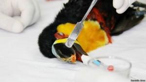 Foto: Cirurgia para implantação da prótese durou cerca de 40 minutos, mas foi delicada pelo uso da anestesia geral