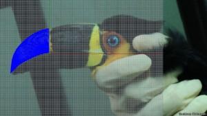 Uso de programa 3D permitiu criar prótese parecida com bico original de Tieta