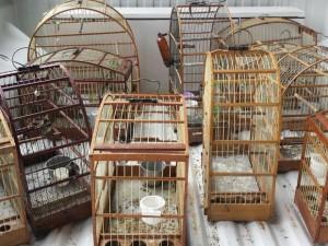 Aves estavam sem registros e foram soltas em um habitat. Foto: Guarda Civil Municipal de Americana