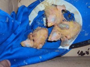 Animais silvestres estavam em caixas de papelão. Foto: Polícia Rodoviária/ Divulgação