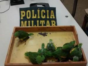 Pássaros foram apreendidos em casa. Foto: Polícia Militar/ Rondonópolis-MT