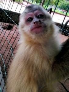 Entre os animais estão três macacos pregos. Foto: Assessoria/ Sema-MT