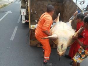 Carcaça do animal foi retirada por caminhão de lixo. Foto: Patrícia Santos/Arquivo pessoal