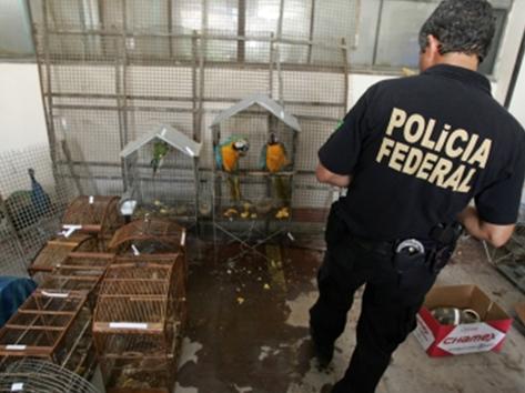 O tráfico de animais silvestres movimenta em torno R$ 3 bilhões no Brasil, atrás apenas do tráfico de armas e de drogas, e as aves estão entre os animais mais cobiçados pelas redes de contrabando (Divulgação)