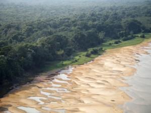 Praias onde tartarugas desovam pisoteadas por búfalos. Foto: Sedam/Divulgação