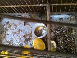 Homem foi multado por maus-tratos. Foto: Divulgação / Polícia Ambiental