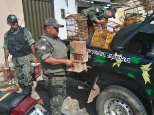 Polícia Ambiental apreendeu mais de 100 animais silvestres em operação na capital. Foto: Polícia Ambiental