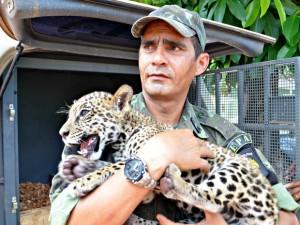 Filhote foi entregue ao Ibama na manha desta sexta-feira (19) e deve ser encaminhado para zoológico no Espirito Santo. Foto: Luizio Oliveira/Arquivo Pessoal