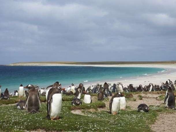 Ilha dos Pinguins, na Argentina.