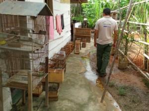 Operação resultou na apreensão de 37 aves silvestres mantidas em cativeiro. Foto: Inea/Divulgação