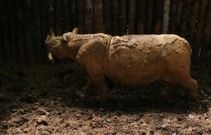 Fêmea chamada Najaq morreu por infecção em seus membros. Foto: WWF/AFP
