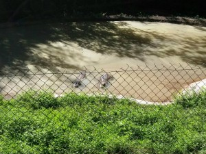 Recinto no Zoológico Municipal de Cascavel (PR) abrigava três jacarés. Foto: Ilair Detoni / Arquivo Pessoal