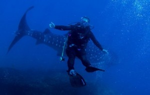 Mergulhadores posaram para fotos com o Tubarão-Baleia. Foto: Alexandre Ogusuku / Divulgação