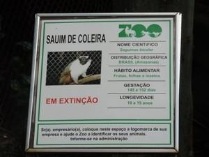 Primata vive de 10 a 15 anos e é da família do sagui. Foto: Heloísa Casonato/G1
