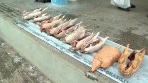 Animais silvestres fonram encontrados abatidos. Foto: Reprodução/TV Clube