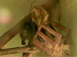 Animais ficaram seis anos nas dependências do bosque Fábio Barreto em Ribeirão Preto. Foto: Valdinei Malaguti/EPTV