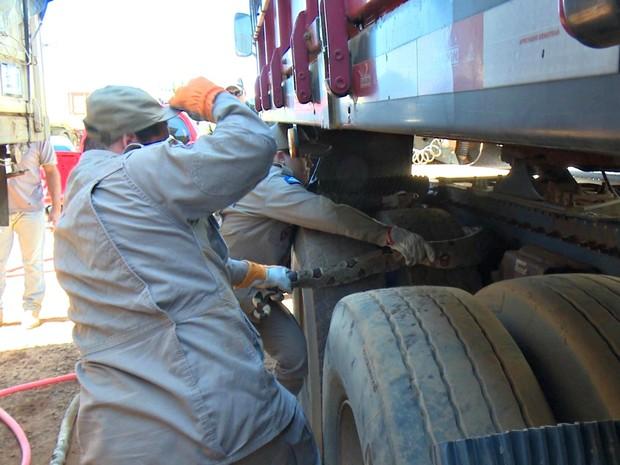 Cobra foi encontrada em eixo de caminhão em cidade de Mato Grosso (Foto: (Foto: Portal Sorriso MT))