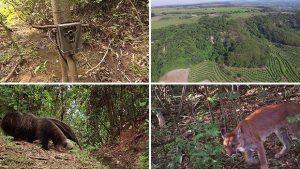 Em dois anos, equipamento registrou cerca de 15 espécies. Foto: Arquivo Samuel Maria e Alexandre Sá/TG