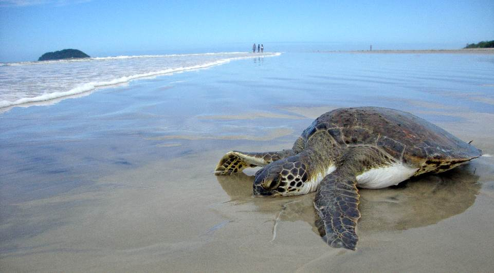 tartaruga-lg-e50534ef