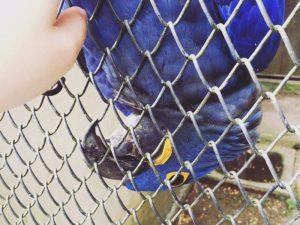 Interessados em adotar animais silvestres precisam se cadastrar no site do IAP. Foto: Divulgação/IAP