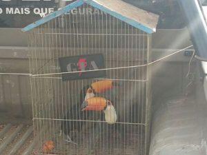 Tucanos recuperados pela PM na casa de homem que mantinha animais em cativeiro. Foto: Polícia Militar/Divulgação