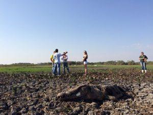 Jacarés morrem depois de lago secar. Foto: Cassiano Rolim/TV Anhanguera