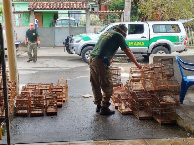 Ibama apreende 60 aves com traficante de fauna no Rio de Janeiro. (Foto: Divulgação/ Internet)