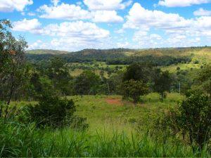 Área em Chapada dos Guimarães foi comprada por ONG internacional. Foto: ONG Global Sanctuary for Elephants/ Divulgação