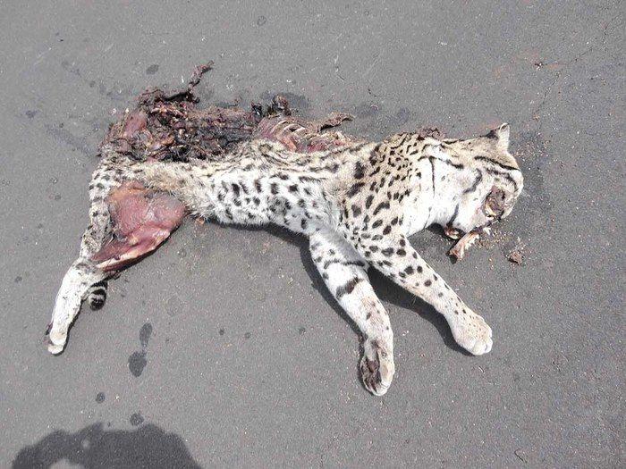 Muitos animais morrem por causa das queimadas e desmatamentos.