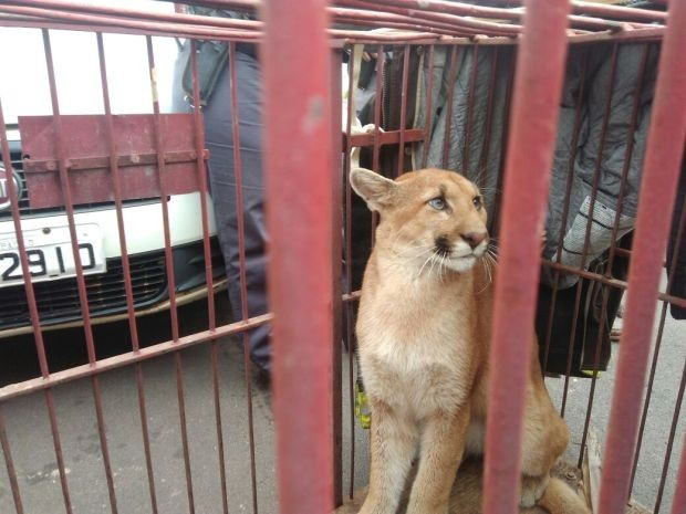 Animais foram devolvidos à natureza (Foto: Samuel Rodrigues Rocha dos Santos/Arquivo Pessoal)