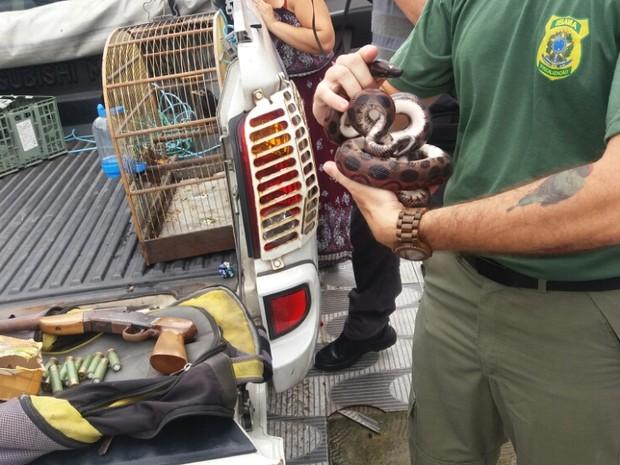 Cobra foi encontrada no cativeiro (Foto: Divulgação/Polícia Ambiental)