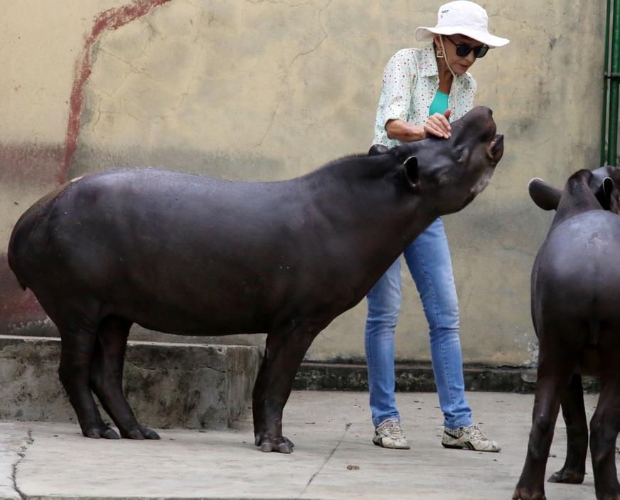 Mãe e filha, uma das antas chegou filhote, já a outra nasceu na casa de Lenita (Foto: Márcio Silva)