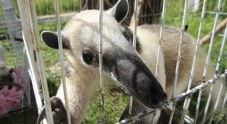 Mais de 5 mil animais silvestres foram recebidos no Cetas somente em 2017