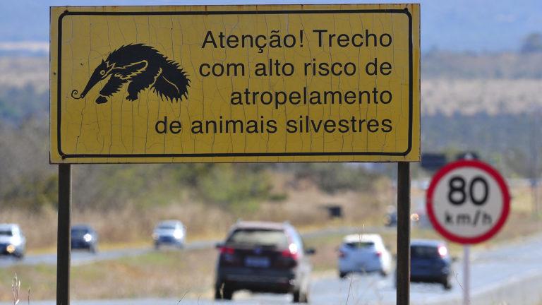 A sinalização é instalada em áreas onde é comum a travessia de animais. Foto: Tony Winston/Agência Brasília