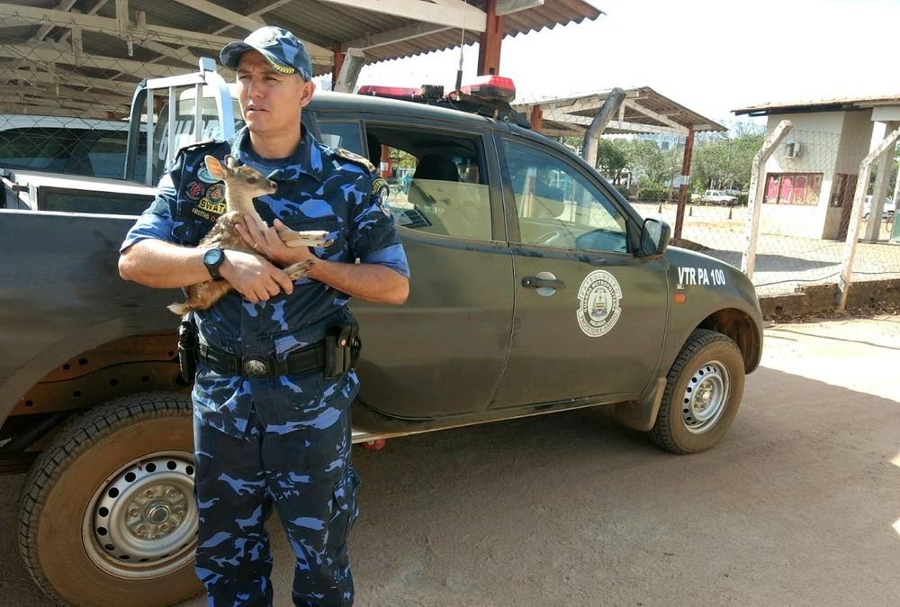 Filhote de veado foi resgatado por morador durante queimada (Foto: Secom/Divulgação)