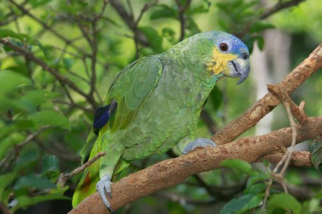 papagaio-kYe-U2023337505533CG-1024x682@GP-Web