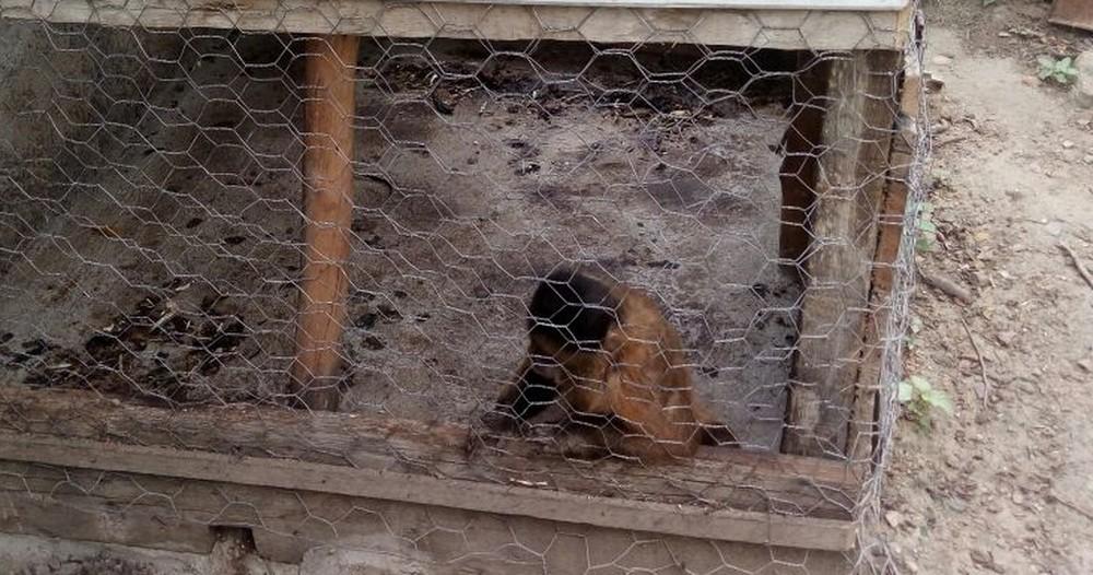 Macaco-prego e mais 12 animais foram encontrados com idosa de 70 anos em Campina Grande (Foto: Rodrigo Soares/ Polícia Ambiental )