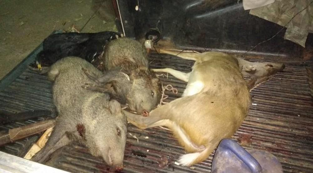 Animais abatidos por caçadores em Jardim, MS (Foto: PMA/Divulgação)