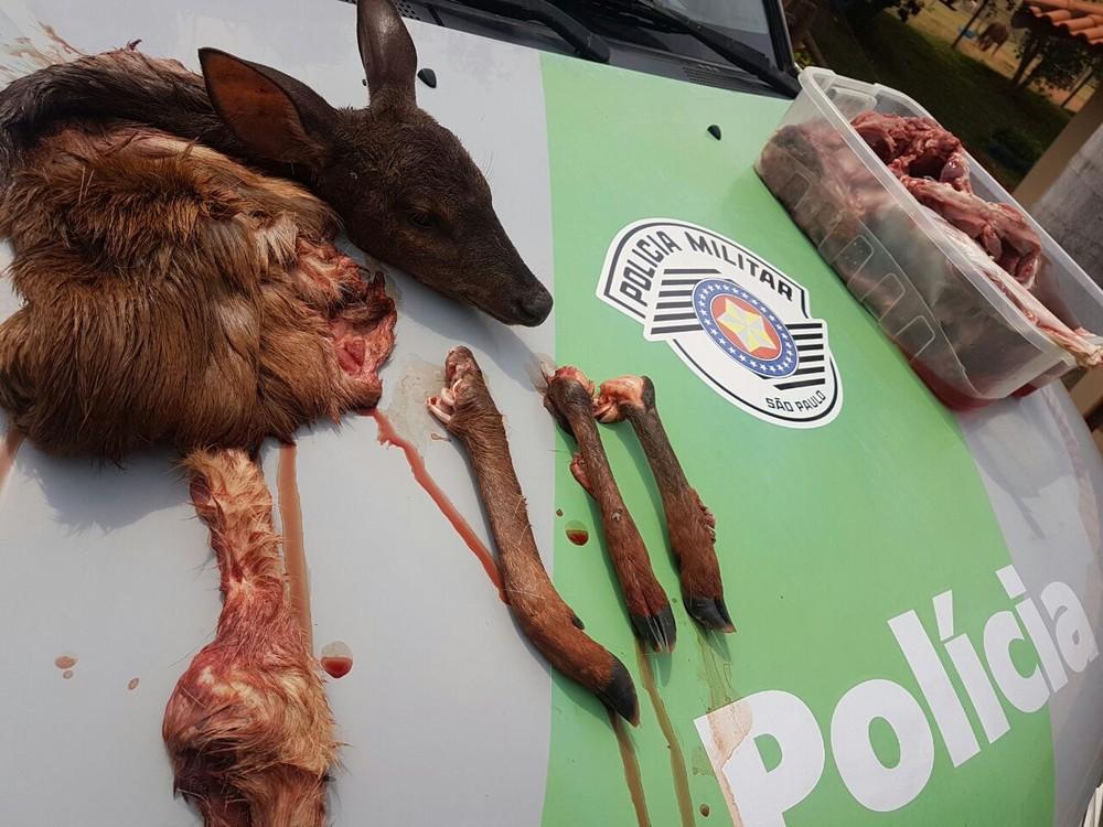 Veado foi abatido em uma fazenda, em Regente Feijó (Foto: Cedida/Polícia Militar Ambiental)