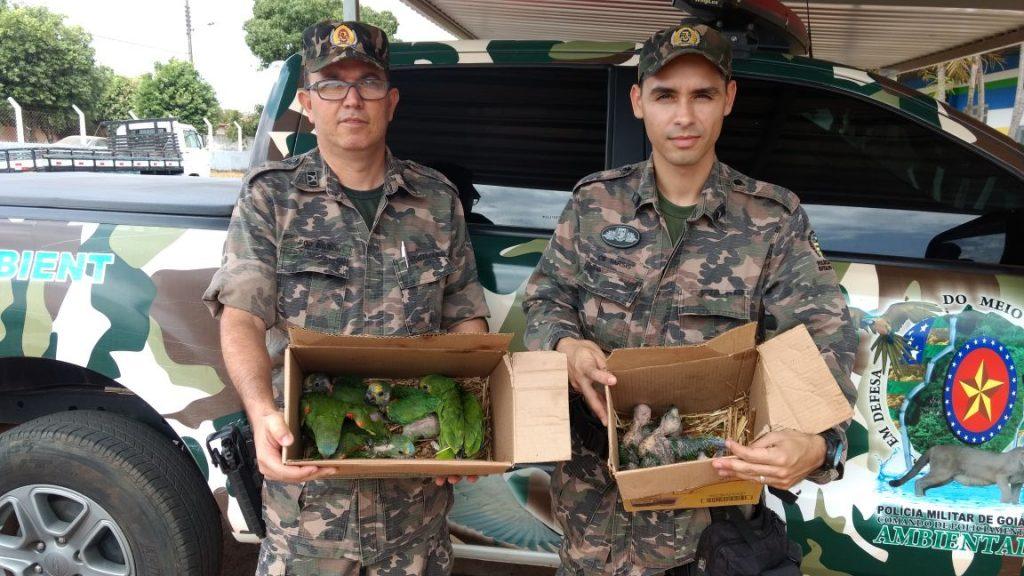 Batalhão Ambiental da PM apreendeu dez filhotes de papagaio. (Foto: Polícia Militar)