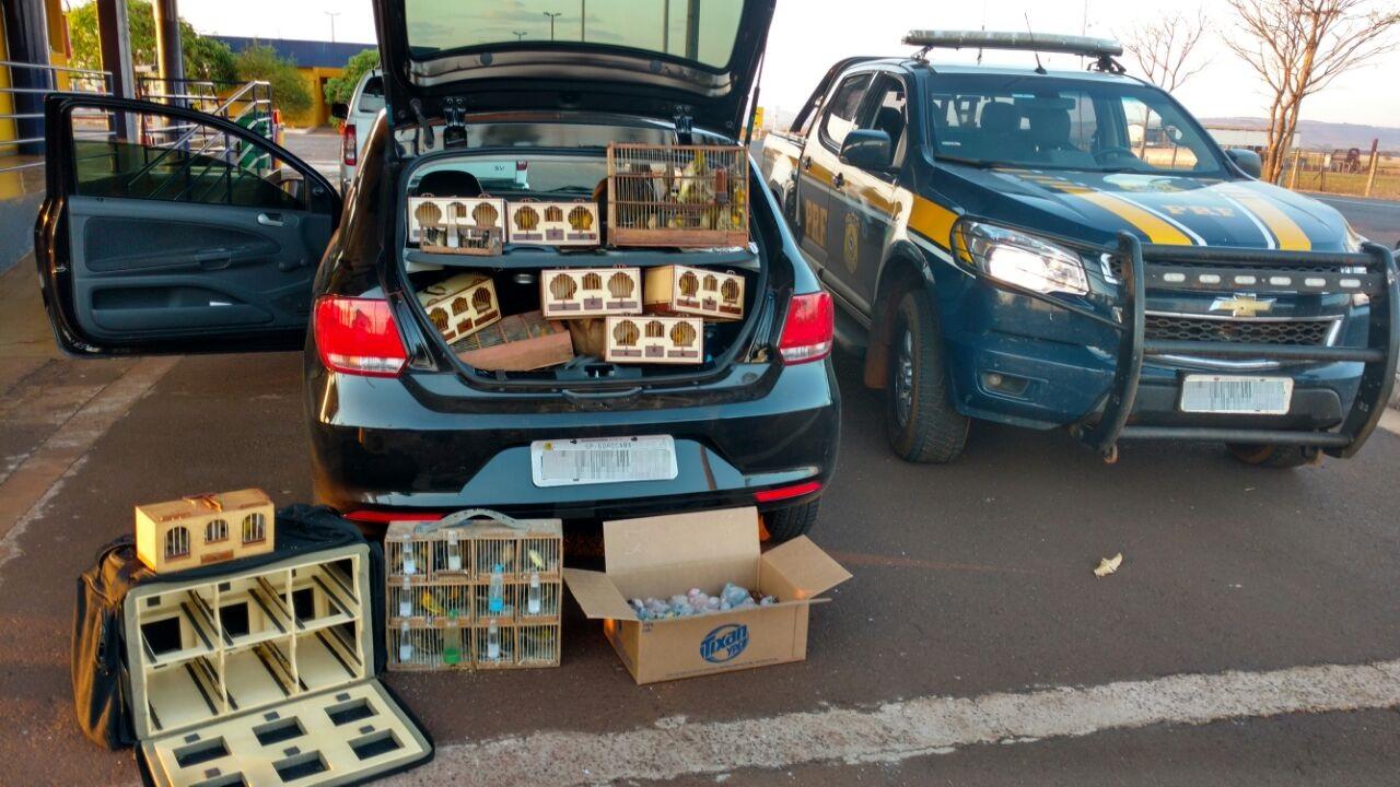 Pássaros estavam dentro de gaiolas espalhadas pelo veículo, em Itumbiara (Foto: Divulgação/PRF)
